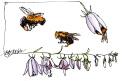 20140712_ULaval garden_bees_sig