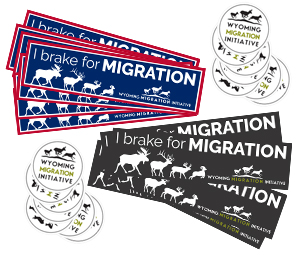 Bumper stickers designed for the Wyoming Migration Initiative
