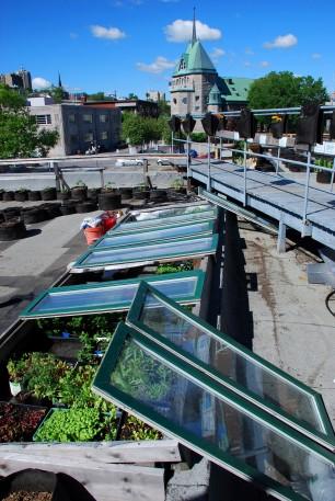 Rooftop community garden