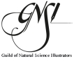 guild-of-natural-science-illustrators-logo-large