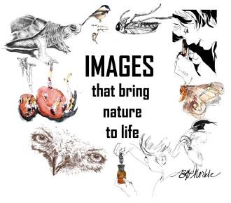 Images (2014)_wordpress