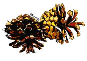 MOO_card_pine cones