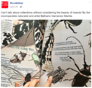"""Insect collecting illustrations & accompanying poem, commissioned by """"Root & Star"""" magazine"""