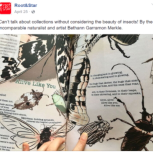 "Insect collecting illustrations & accompanying poem, commissioned by ""Root & Star"" magazine"