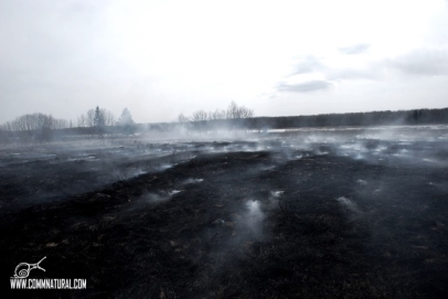 Smoke over blackened earth_BG Merkle (05.2013)