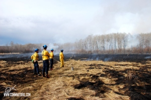 Prescribed burning to increase bison habitat (Saskatchewan)