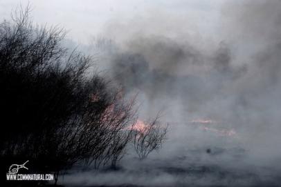 Willows burning 3_BG Merkle (05.2013)