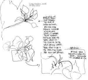 2013_bison summer sketches (15)_aspen shadows_clean