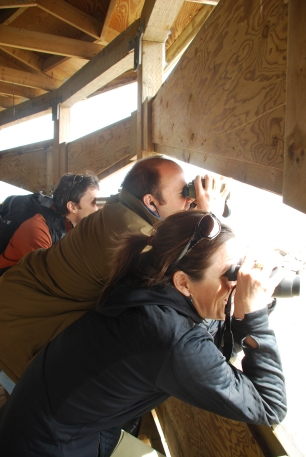 Ecologists observe snow geese (Cap Tourment Migratory Bird Refuge, Quebec)