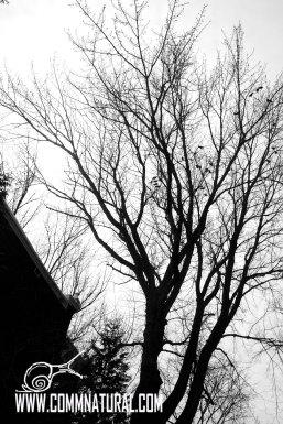 20140403_owl & crows (19)_cr_bw_wm