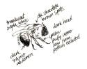 2013_bison summer sketches (26)_bee_clean
