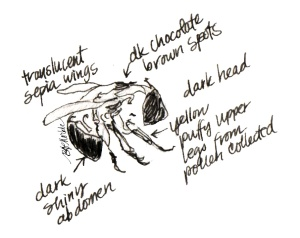 2013_bison summer sketches (26)_bee_clean