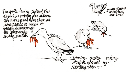 2014_spring & summer sketches (31)_c_clean_gulls_sig