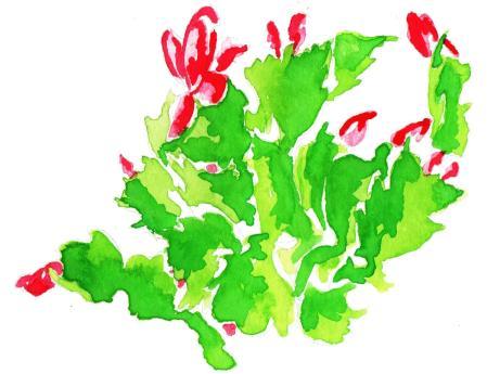 Christmas cactus_color_flip