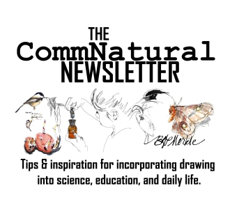 CommNatural Newsletter Header (2014)_wordpress