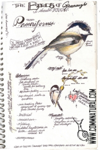 Chickadee sketch book page_wm