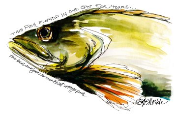 Complimentary colors (green & orange); fish in an aquarium (watercolor & felt-tip pen over pencil)