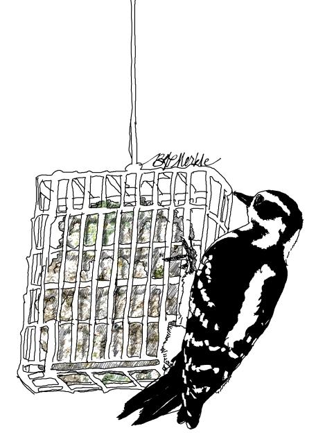 Woodpecker at suet feeder_v2