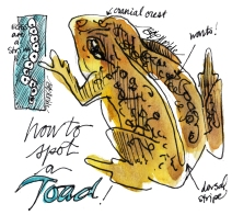 WY scenes_sketch_p4_toad_clean_rs