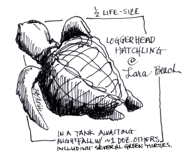 2014_Europe sketches (25)_sea turtle_clean_sig