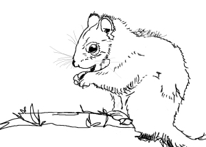IMG_0024_bw_squirrel illust_sig