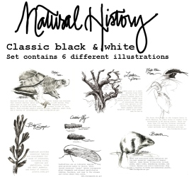 Drawn to the West_natural history b&w.jpg
