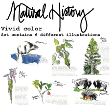 Drawn to the West_natural history color