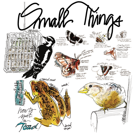 Drawn to the West_small things 2015
