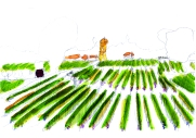 MOO_card_vineyard