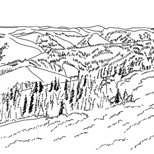 Landscape illustration, commissioned by researcher studying newly identified Cassia's crossbill