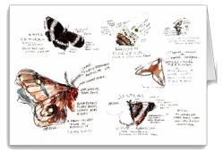 Moths_card icon
