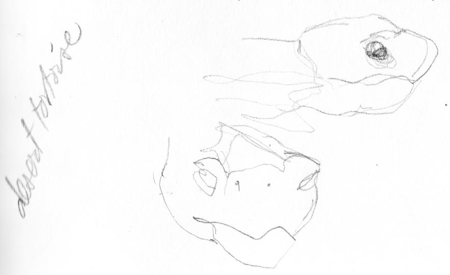 20151230_desert tortoise sketch 1_clean_sig.jpg