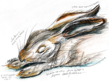 An Ecological Storybook Writing Illustrating An Ecologically