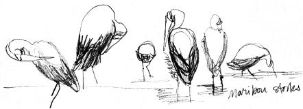 Maribou storks_3_clean-ish