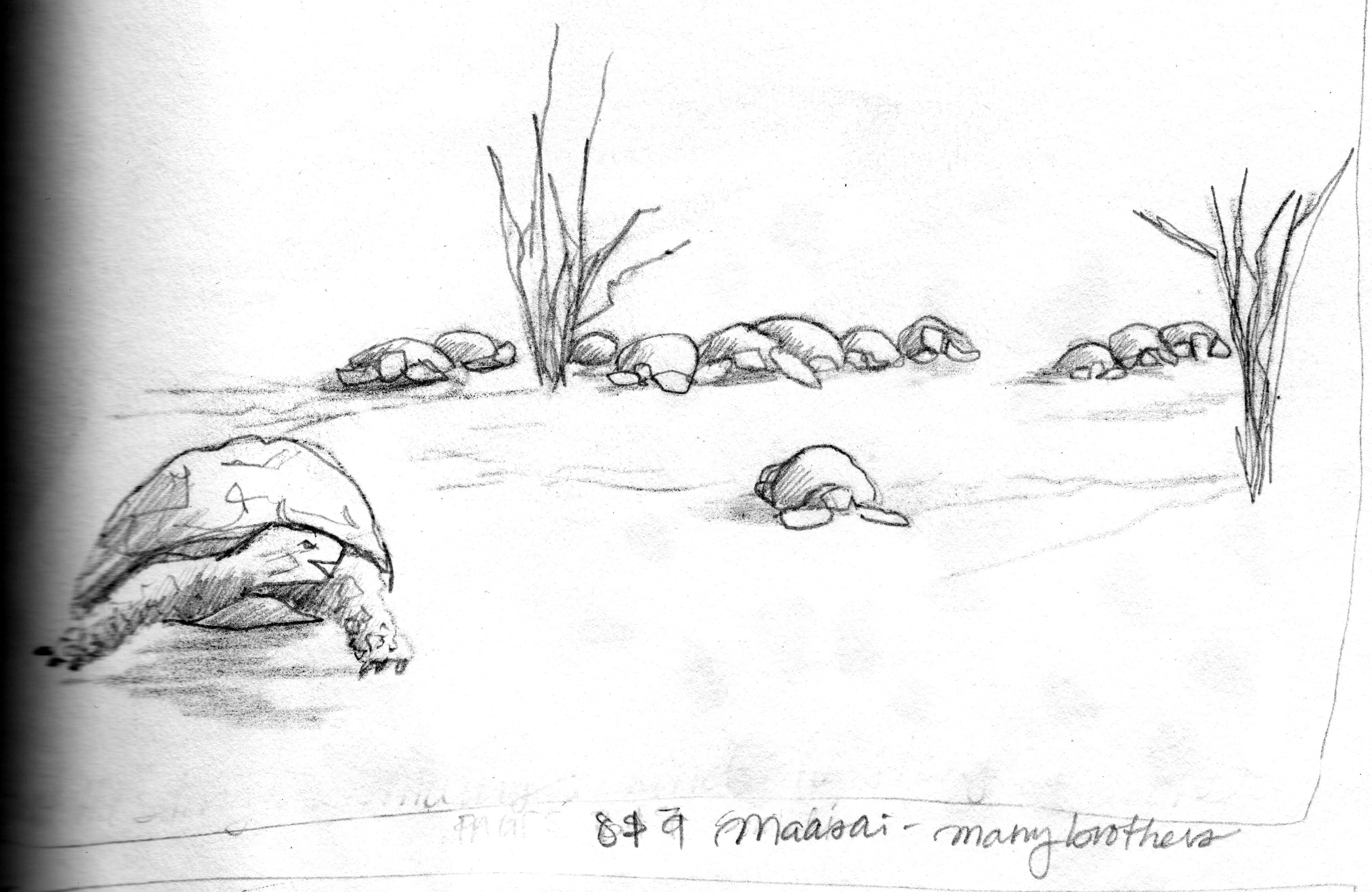 20161002_tortoise-hare_maasai_many