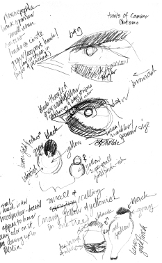 20160105_phoenepephla study sketches.jpg