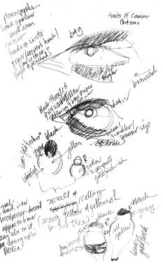 20160105_phoenepephla study sketches.jpg