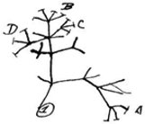 drawing-to-learn-framework_phylogenetic-tree