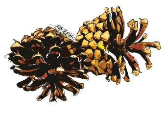 moo_card_pine-cones_rs