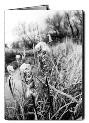 bw_cattails_card icon