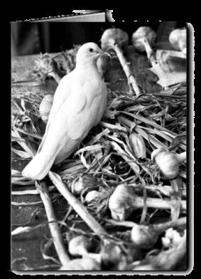 bw_dove_garlic_card icon