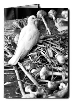bw_dove_garlic_card icon