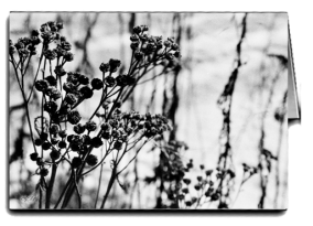bw_dried_tansy_card icon