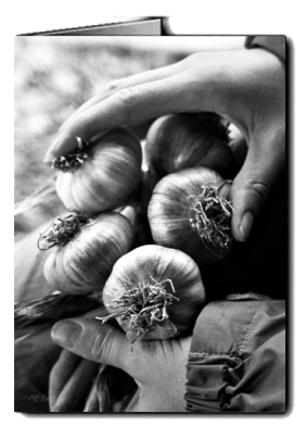 bw_Ivy_hand_garlic_card icon