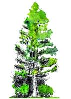 Moo_card_big tree_no text
