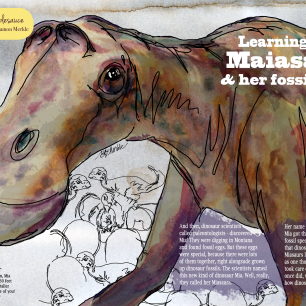 Illustrations and article about Maiasaura dinosaurs, for root and star magazine