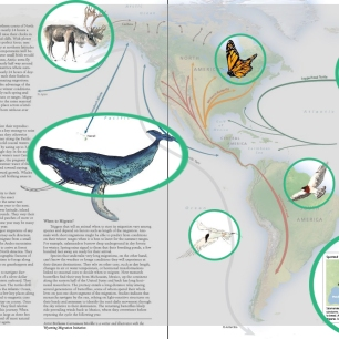 "Illustrations for this spread in ""Wild Migrations: An Atlas of Wyoming's Ungulates"""