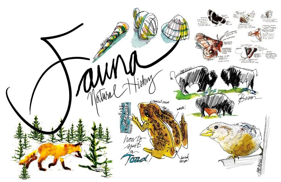 20190321_Drawn_to_Natural_History_fauna