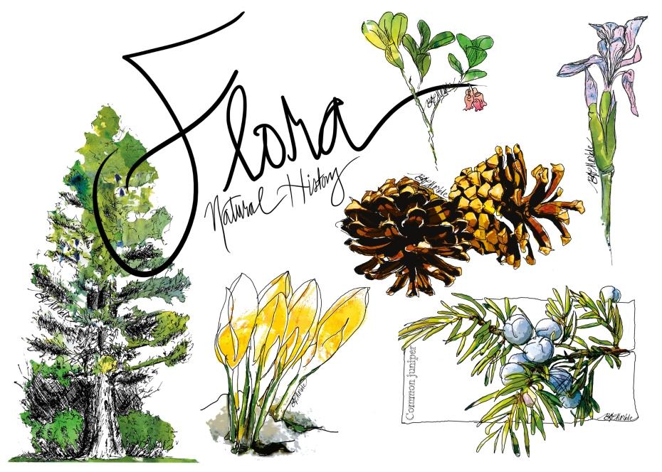 20190321_Drawn_to_Natural_History_flora